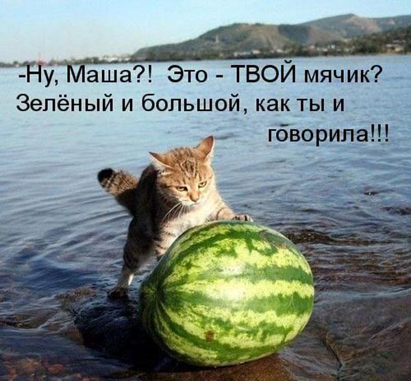 http://lady.ucoz.ru/_nw/2/92055257.jpg